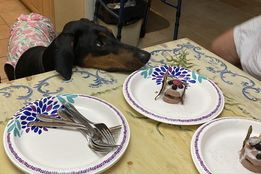 photo of a dog witing to eat a raw birthday cake