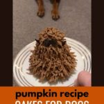 Pumpkin recipe cakes for dogs - step-by-step photo tutorial