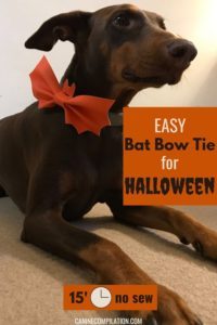 Easy Dog Bat Bow Tie for Halloween - 15' no sew, photo tutorial