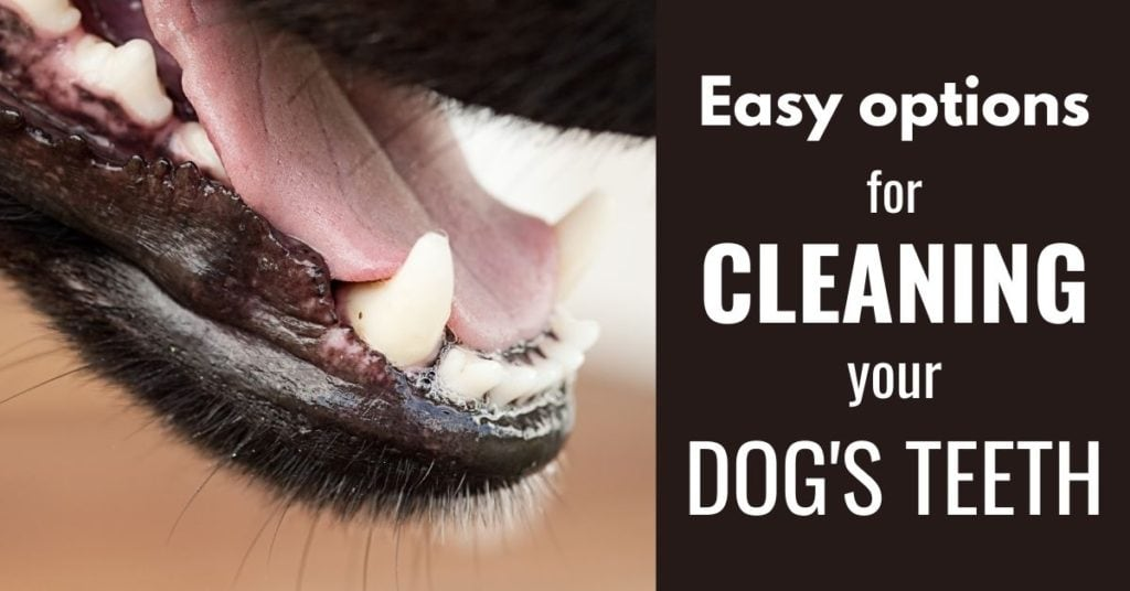 Easy and natural ways to clean your dog's teeth, not just brushing
