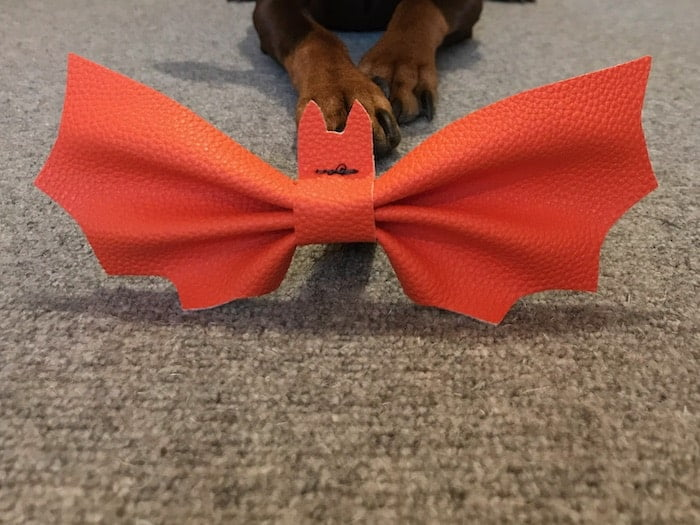 Bat bow tie for dogs - done