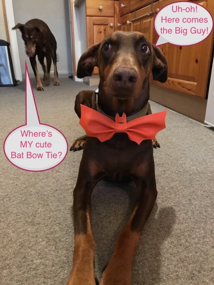dog bow tie speech bubbles