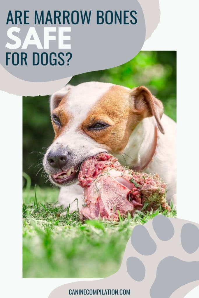 Image of a dog eating a bone with text Are marrow bones safe for dogs?