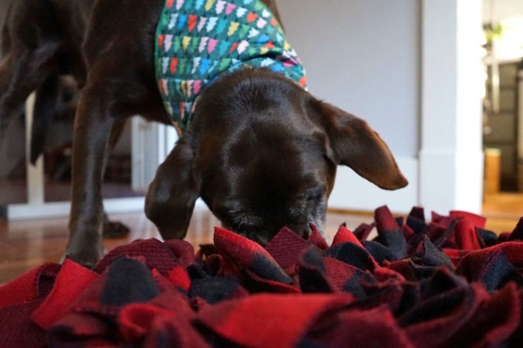 Make a DIY Snuffle Mat for Dogs and image of dog with snuffle mat