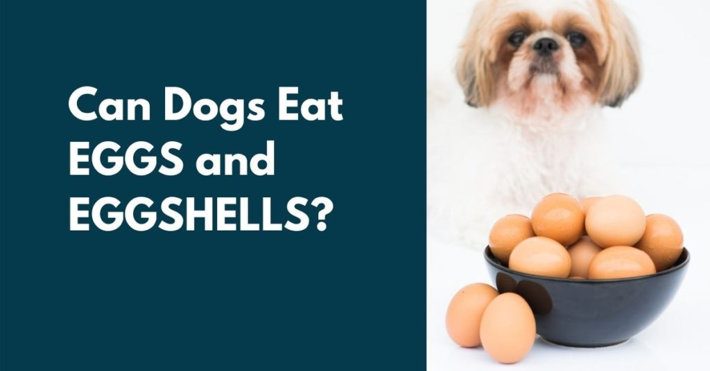 image of dog and a bowl of eggs, with text that reads Can dogs eat eggs and eggshell?