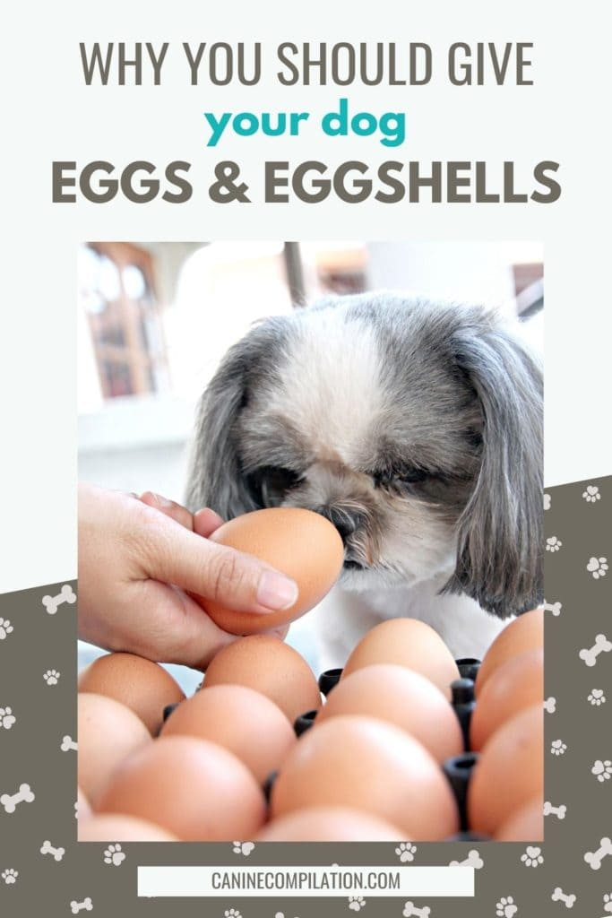 image of dog and a bowl of eggs, with text that reads WHY YOU SHOULD GIVE YOUR DOG eggs and eggshellS