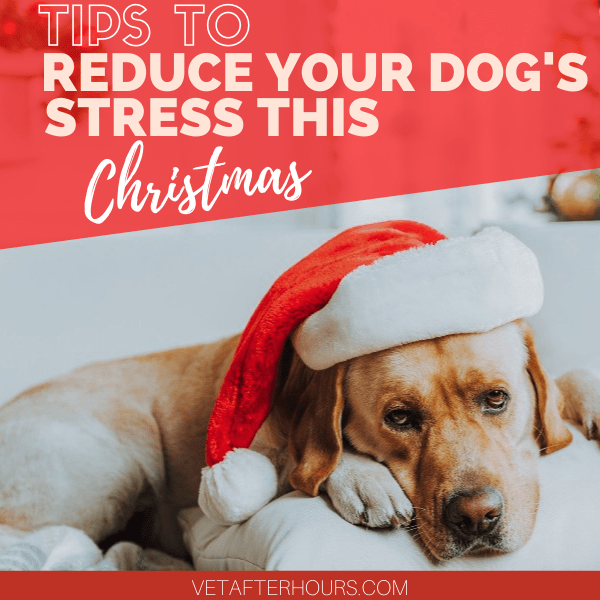 Image of dog with text Tips To Reduce Your Dog's Stress This Christmas