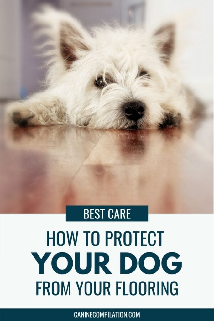Image of a dog on a slippy floor and text - how to protect your dog from your flooring