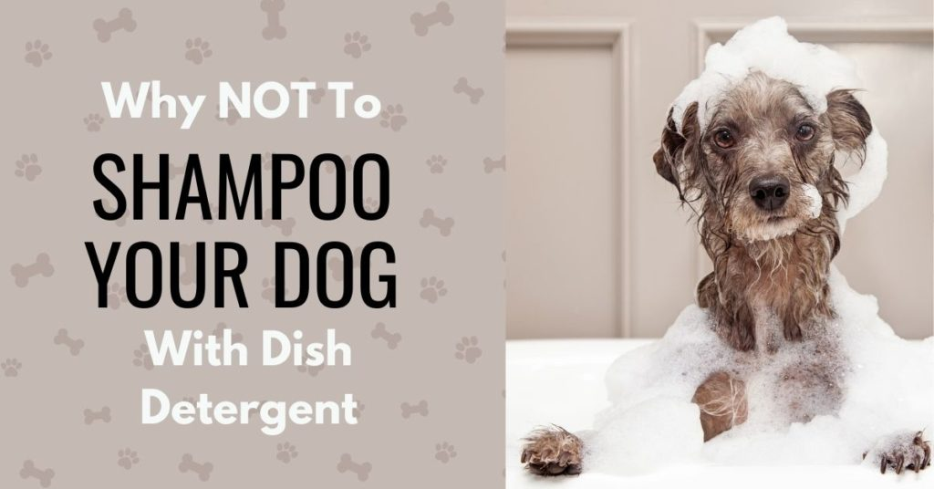 Dog being bathed with text 'Why not to shampoo your dog with dish detergent'
