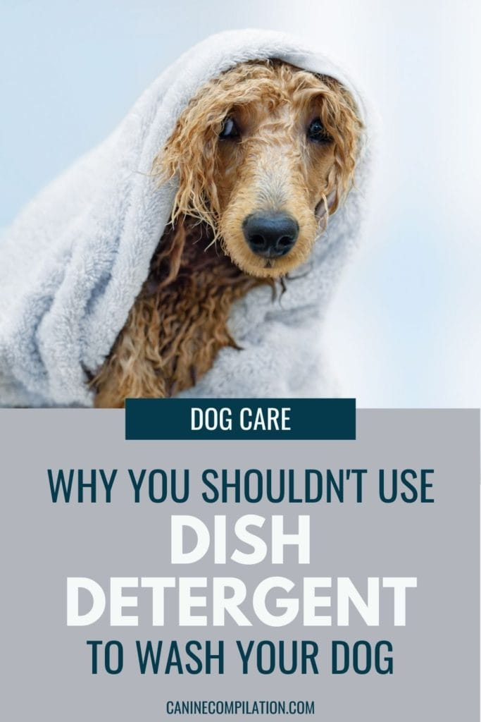 image of a dog in the bath with text Why not to use dish detergent to bath your dog