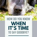 Image of an elderly dog with text 'How do you know when to say goodbye?'