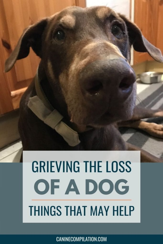a photo of my dog, with the text Grieving the loss of a dog - things that may help