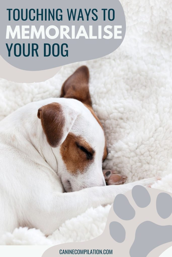 Image of a dog with text Touching ways to memorialise your dog.