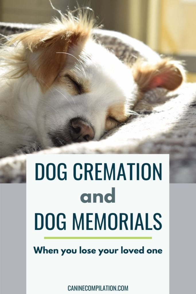 Photo of a dog, with text - Dog cremation and dog memorials