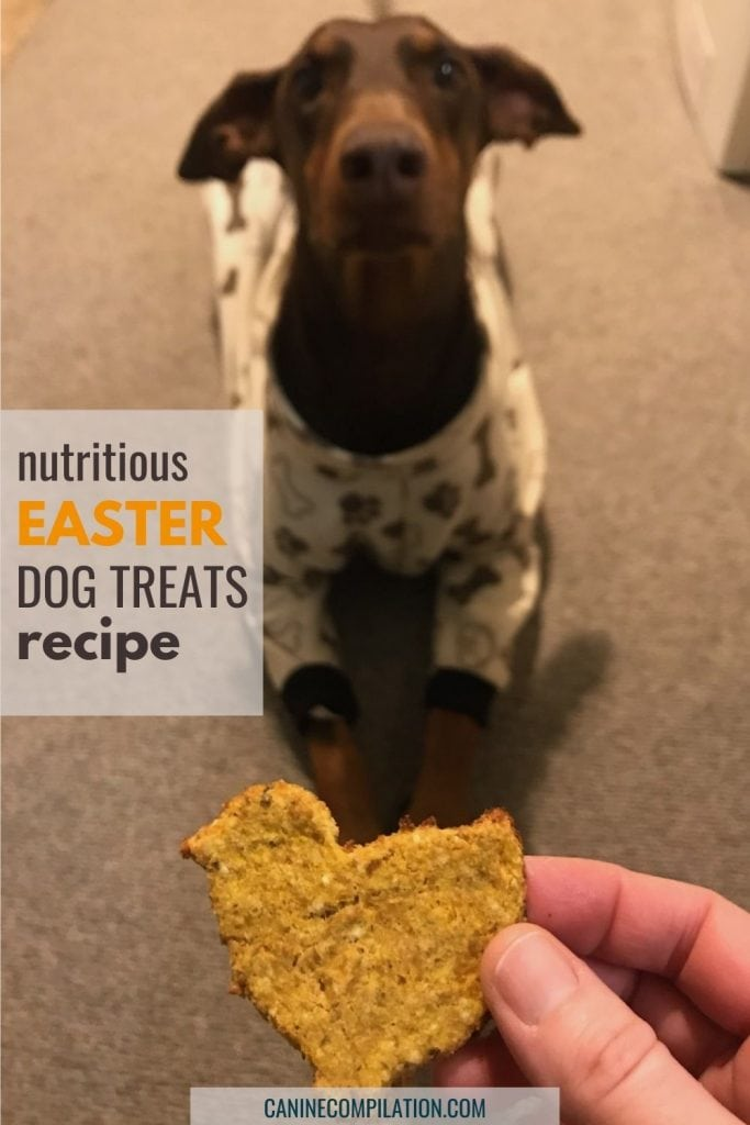 photo of a dog with a bird shaped dog treat and text - nutritious Easter dog treats recipe