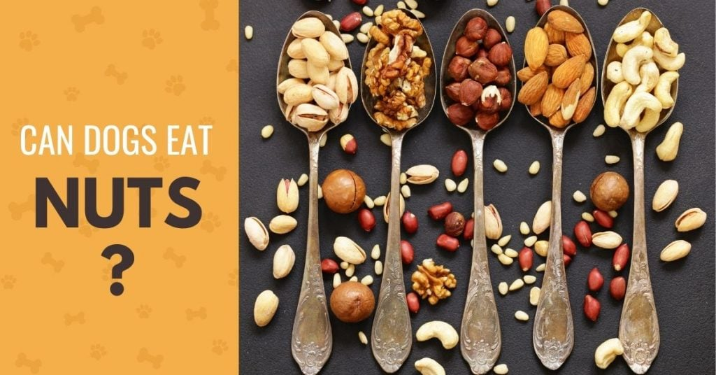 image of different kinds of nuts, with text Can dogs eat nuts?