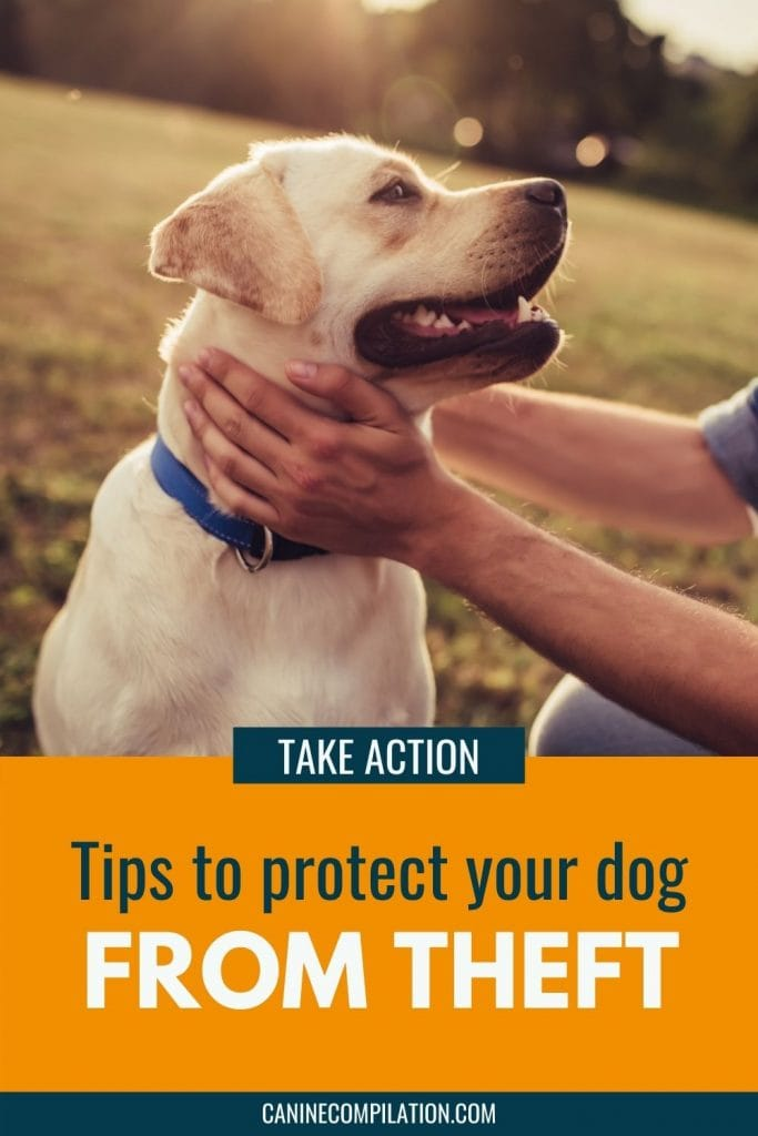 Image of a dog and a hand, with text -How to keep your dog safe from theft