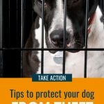 Image of a dog in a crate, with text -How to keep your dog safe from theft