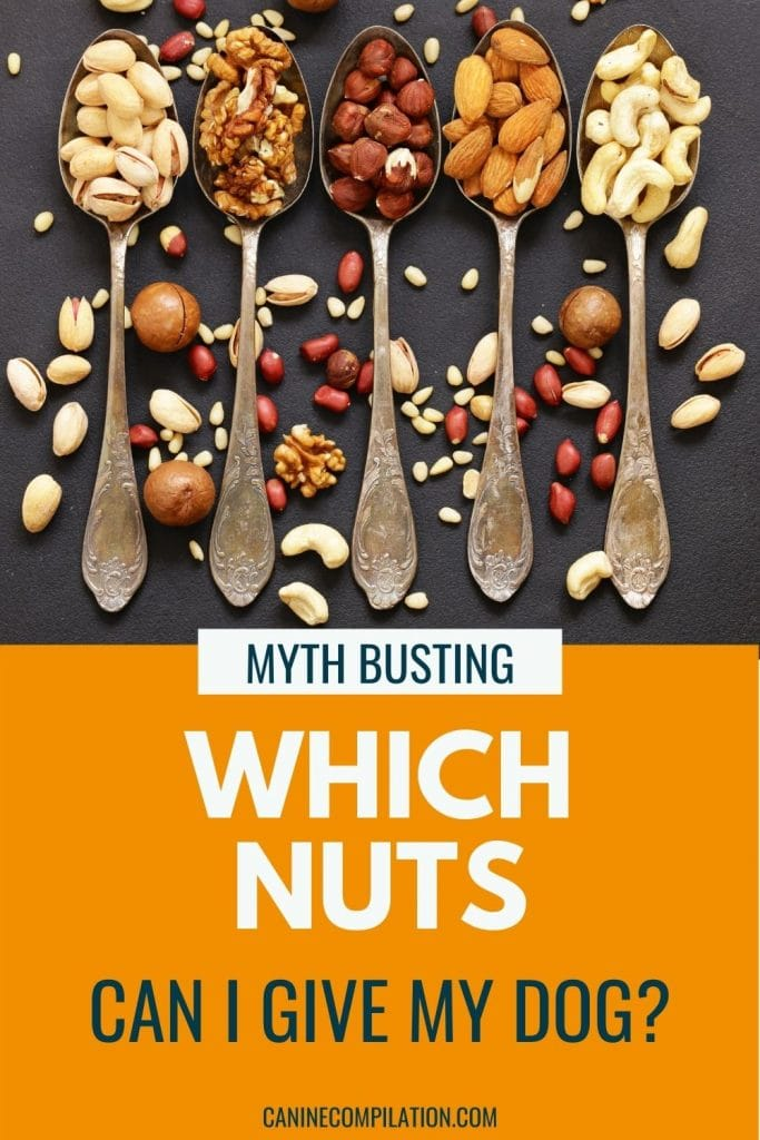 Image of different types of nuts with text, Can my dog eat nuts?