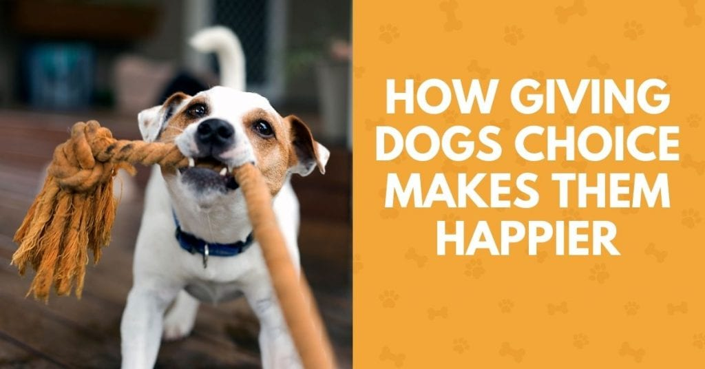 photo of a dog playing tug with text How giving dogs choice makes them happier