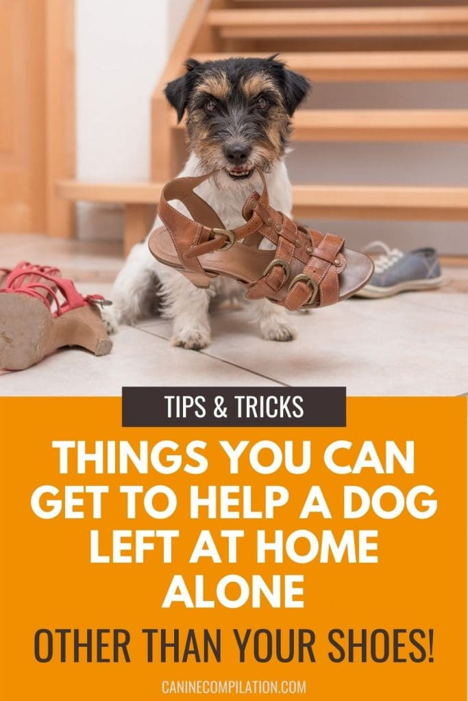 photo of a dog chewing a shoe with text - things you can get to help a dog left at home alone other than your shoes