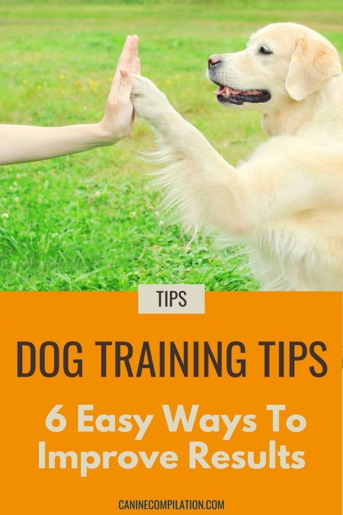 Photo of a dog with paw touching someone's hand and text- Dog training tips, 6 easy ways to improve results