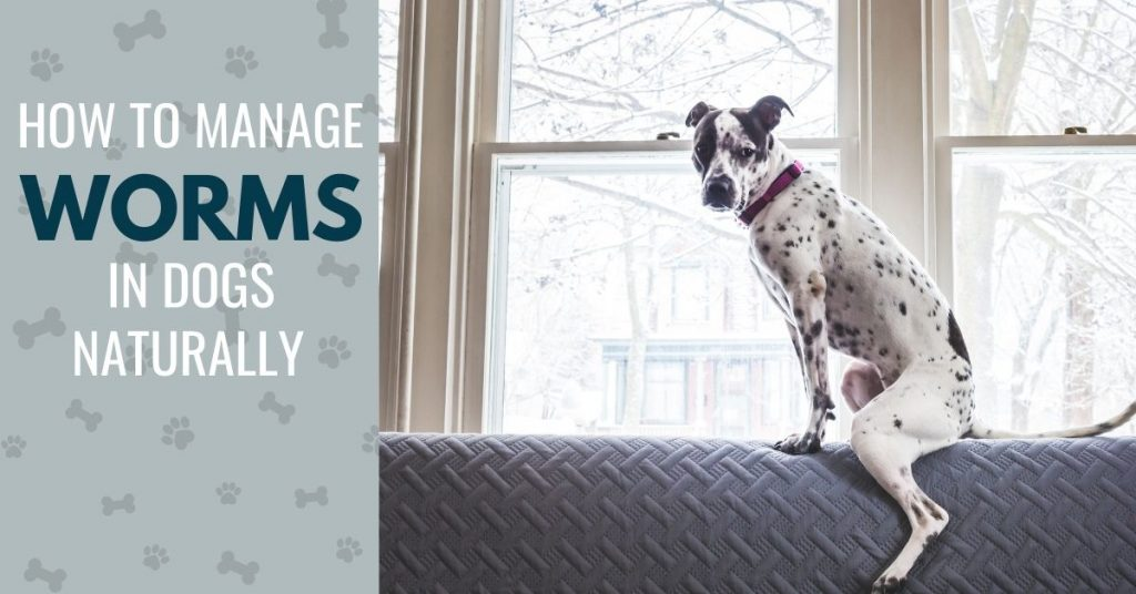 photo of a dog on a sofa with text - How to manage worms in dogs naturally