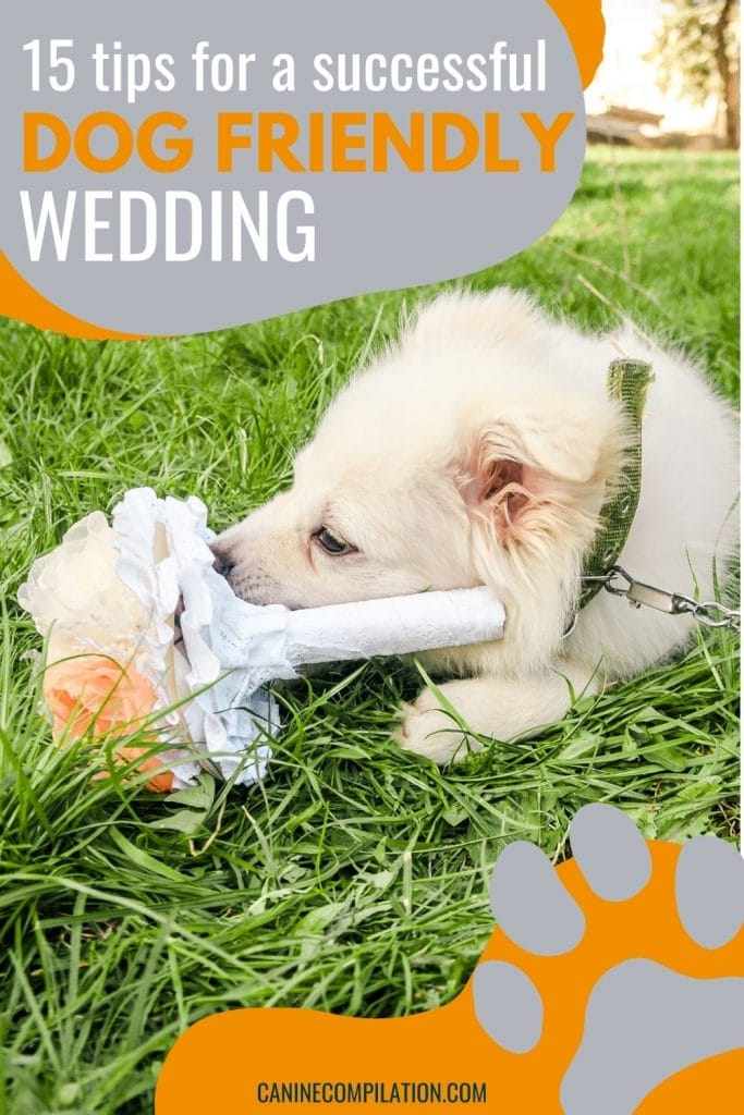 photo of a couple getting married with a dog next to them, with text how to plan a dog friendly wedding