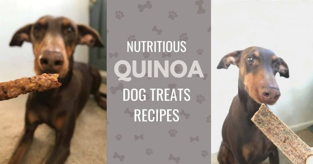 picture of dog eating quinoa dog treats