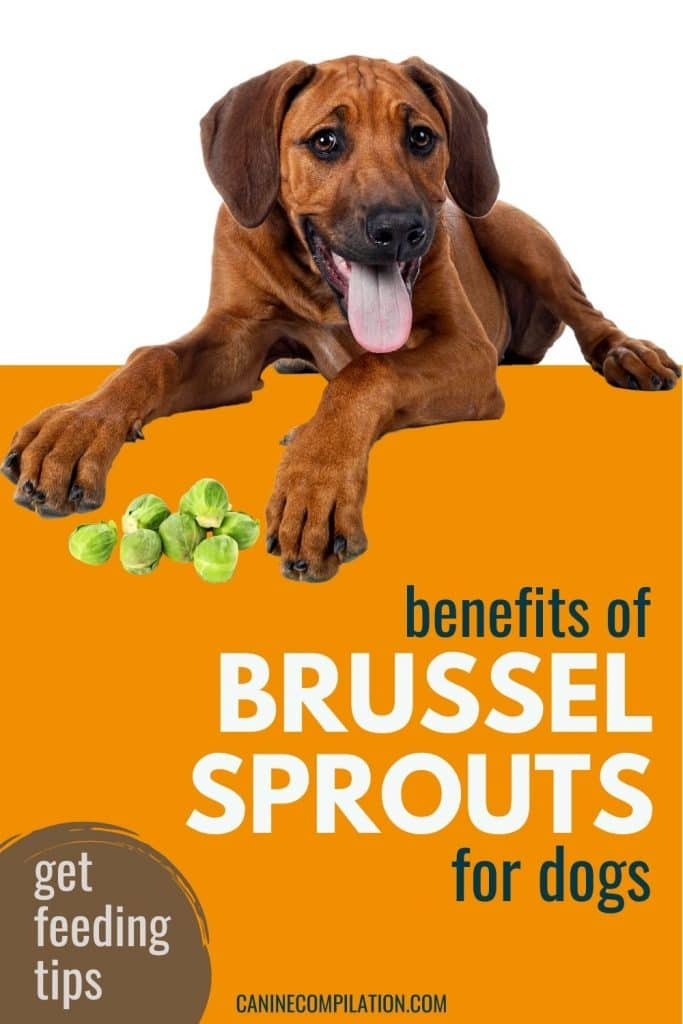 photo of a dog with text - can dogs eat brussel sprouts? Benefits of sprouts for dogs