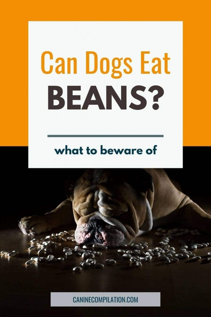 photo of a dog with a pile of beans, plus text: Can dogs eat beans?