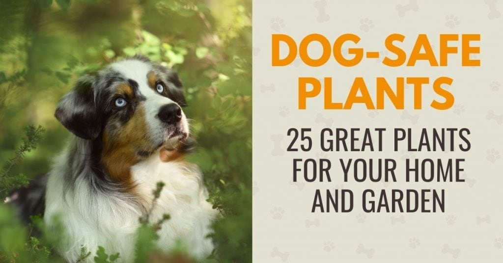 photo of a dog in a plant with text - Are your plants safe for your dog? A list of 25 dog friendly plants for your home and garden