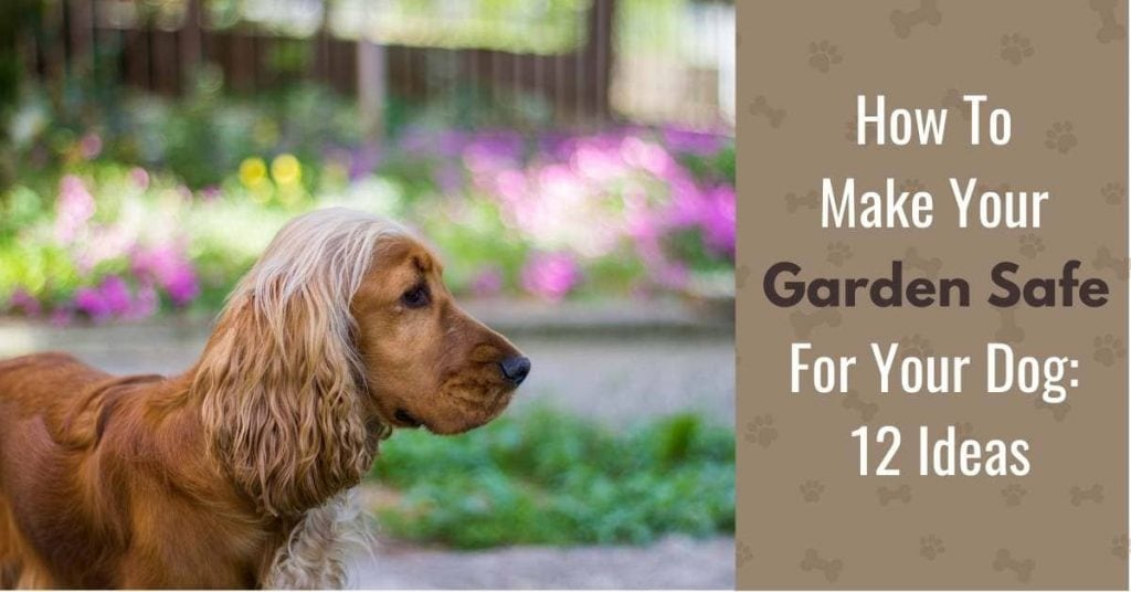picture of a dog in a garden with text - how to make your garden safe for your dog - 12 ideas