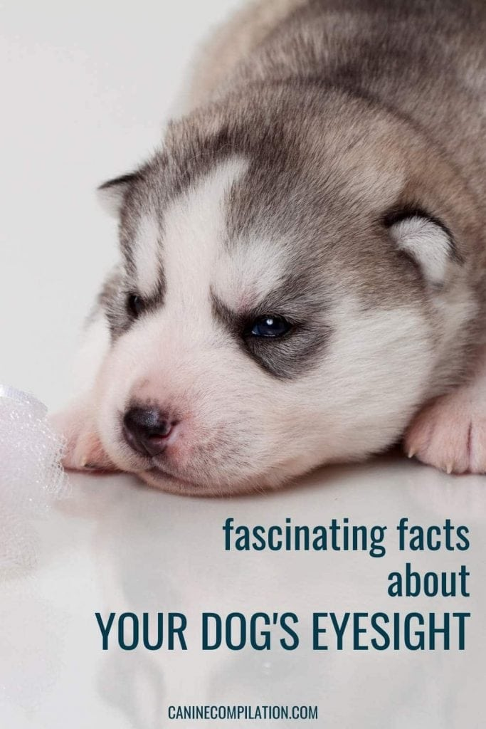 picture of a newborn puppy with text- facts about puppies' eyesight