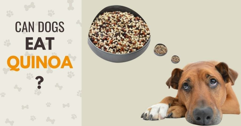 a picture of quinoa with text - Is quinoa good for dogs