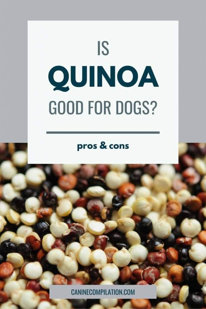 a picture of quinoa with text - Is quinoa good for dogs?