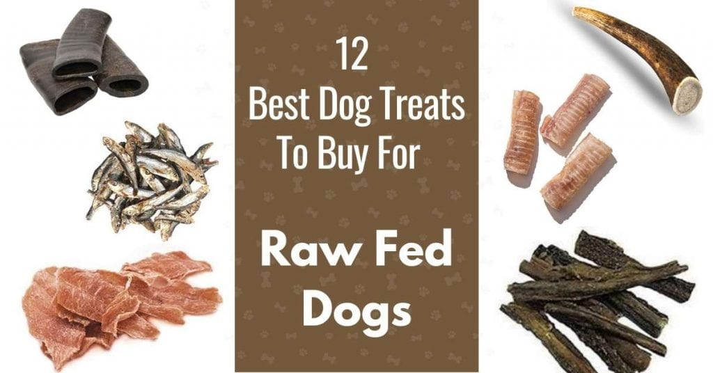 best dog treats to buy for raw fed dogs