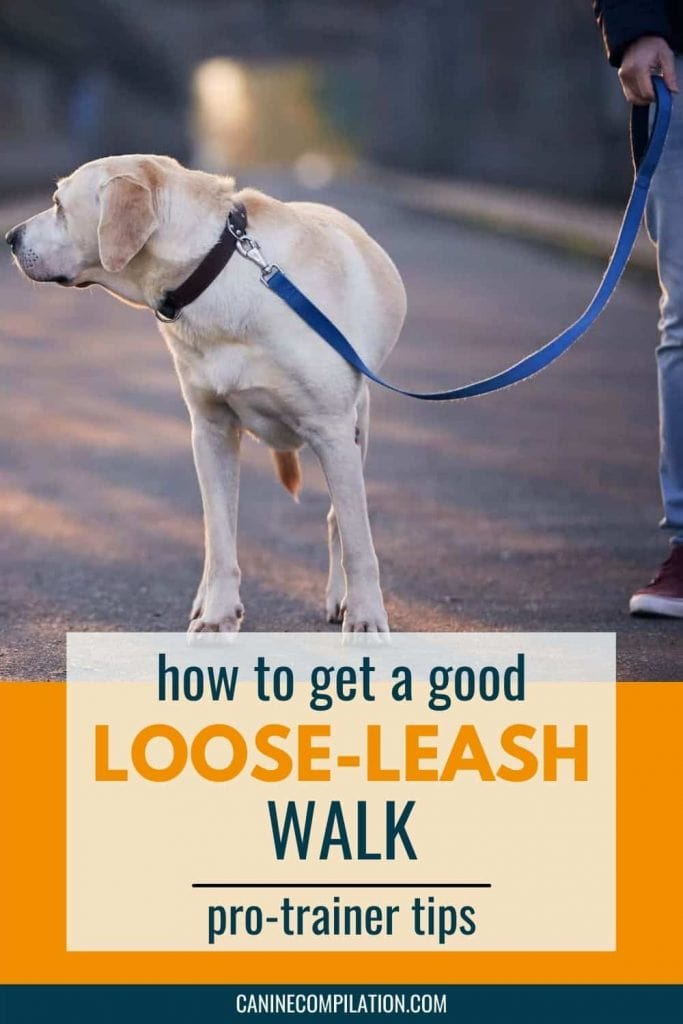 dog walking with a loose leash