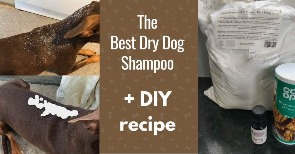 dry shampoo for dogs - powder and mousse