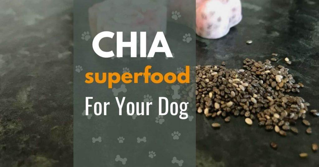 chia seeds in dog treat recipe