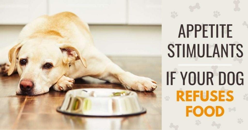 dog won't eat - natural appetite stimulants for dogs