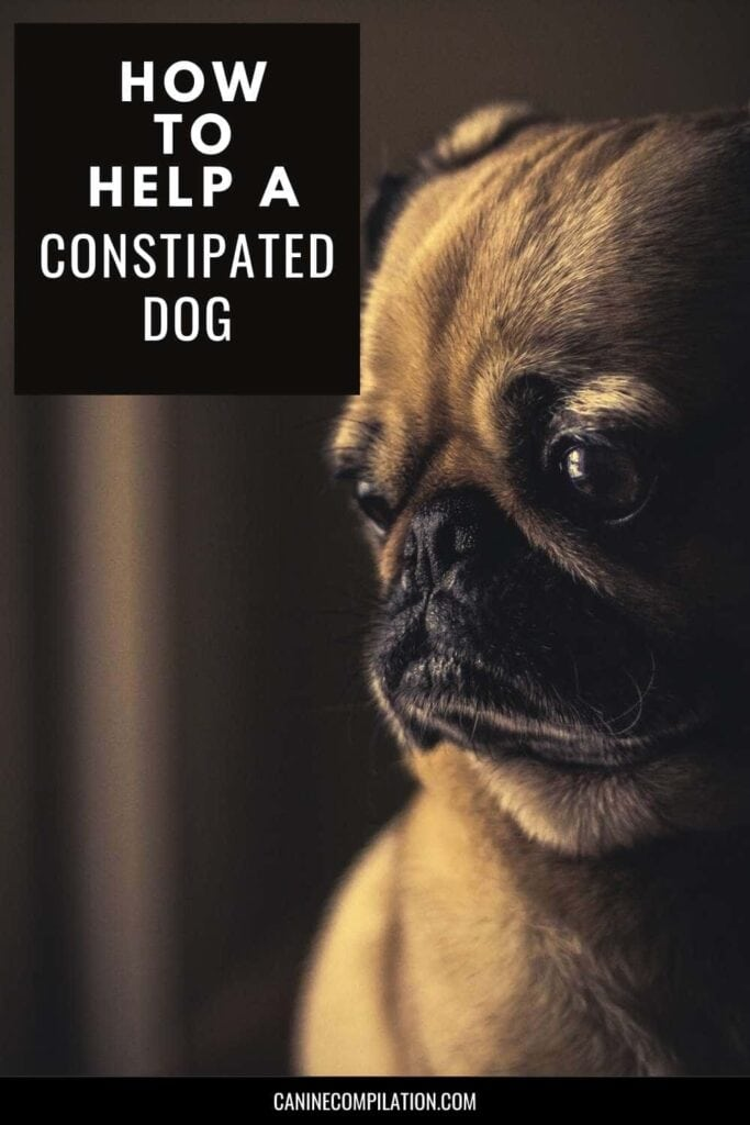 Dog can't poop? How to fix constipation in dogs - picture of dog trying to poop