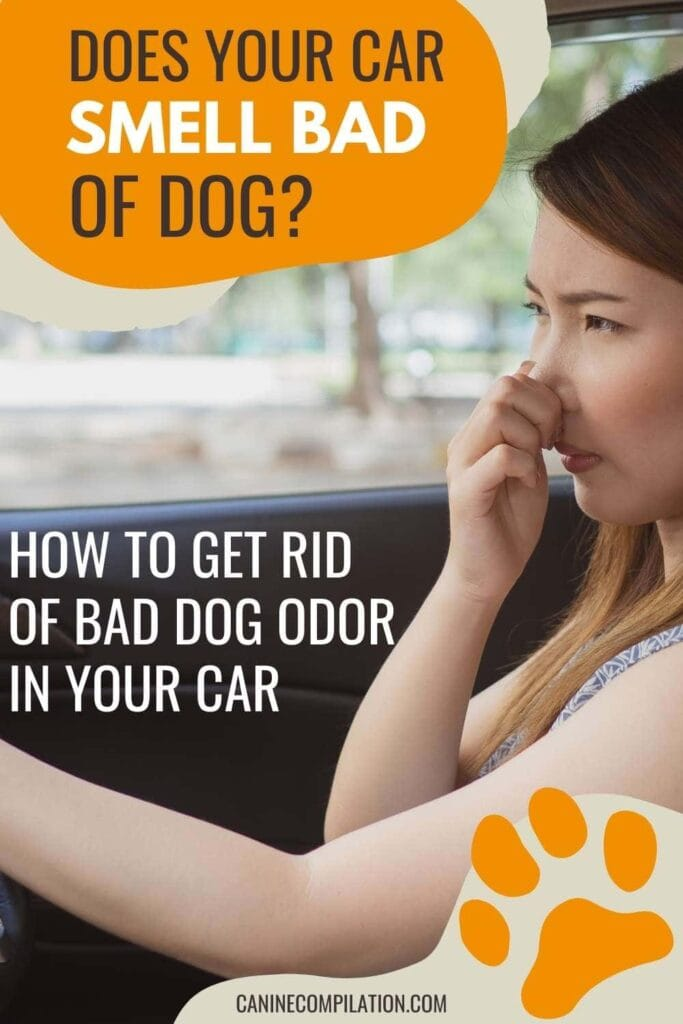 how to get rid of bad dog smells in a car