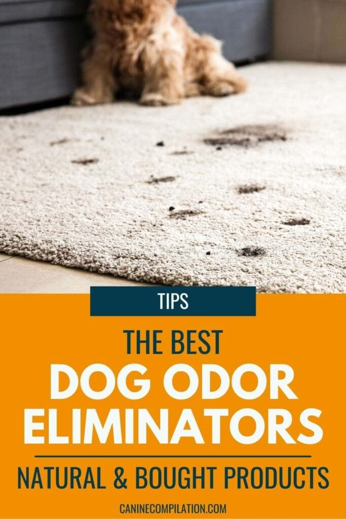 how to get rid of bad dog smells