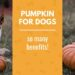 Pumpkin for Dogs – 7 Pumpkin Dog Treat Recipes