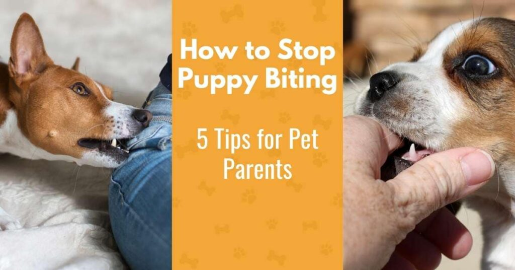 puppies biting - how to stop puppy biting