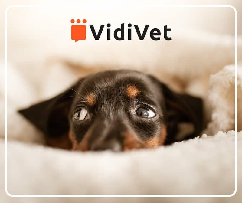 vidivet - 24/7 vet video service